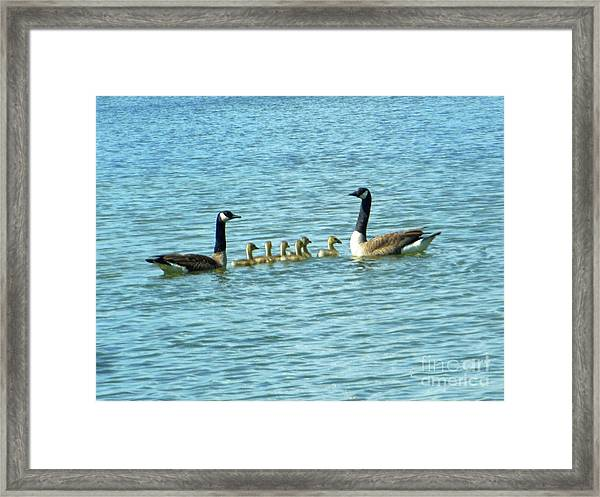 Geese Proud Parents Framed Print