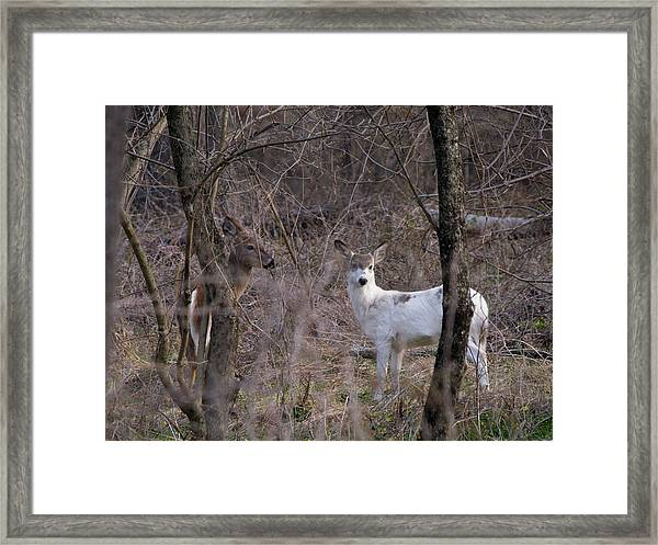 Genetic Mutant Deer Framed Print