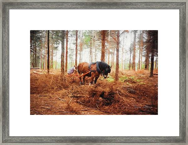 Gentle Giant - Horse At Work In Forest Framed Print