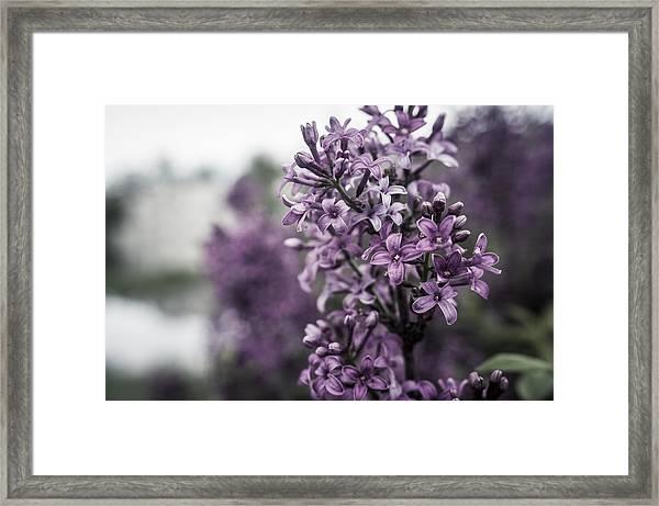 Gentle Spring Breeze Framed Print