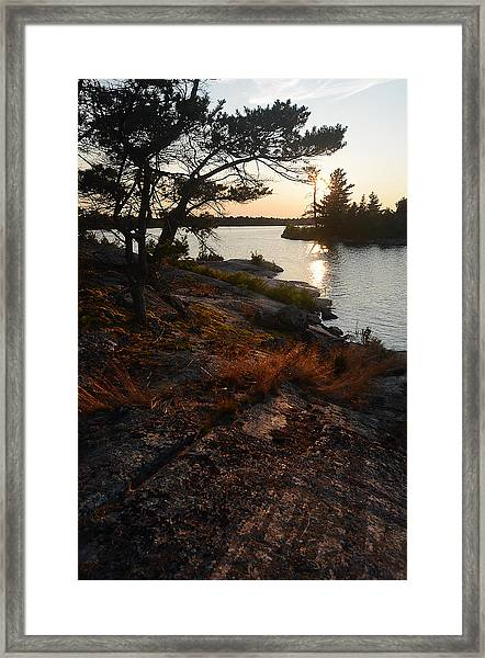 Georgian Bay Rock-wild Grass At Sunset Framed Print