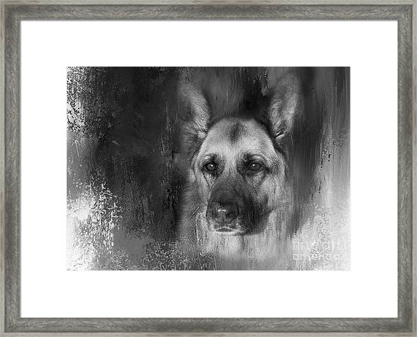 German Shepherd In Black And White Framed Print