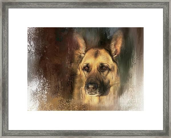 German Shepherd Portrait Color Framed Print