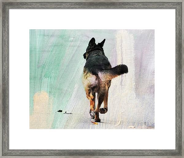 German Shepherd Taking A Walk Framed Print