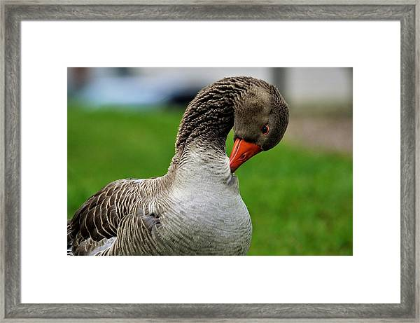 Getting Ready For Bed Framed Print