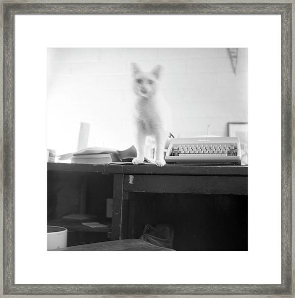 Ghost Cat, With Typewriter Framed Print
