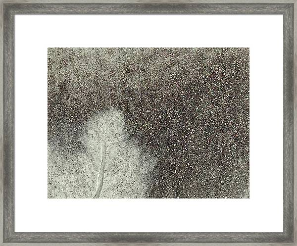 Ghost Leaf Framed Print