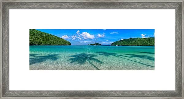 Ghost Palms Framed Print