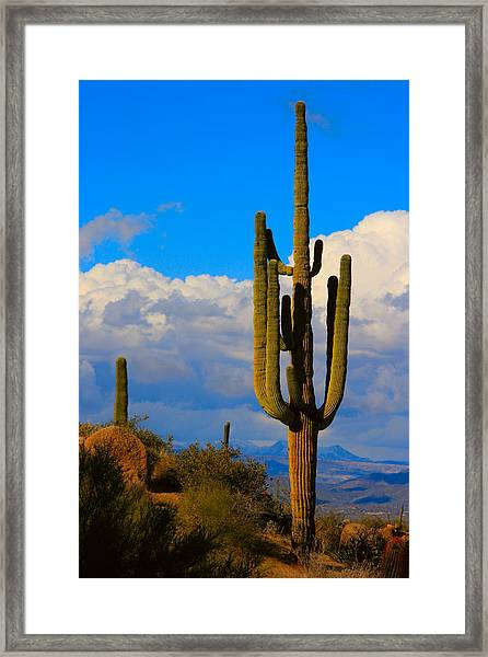 Giant Saguaro In The Southwest Desert  Framed Print