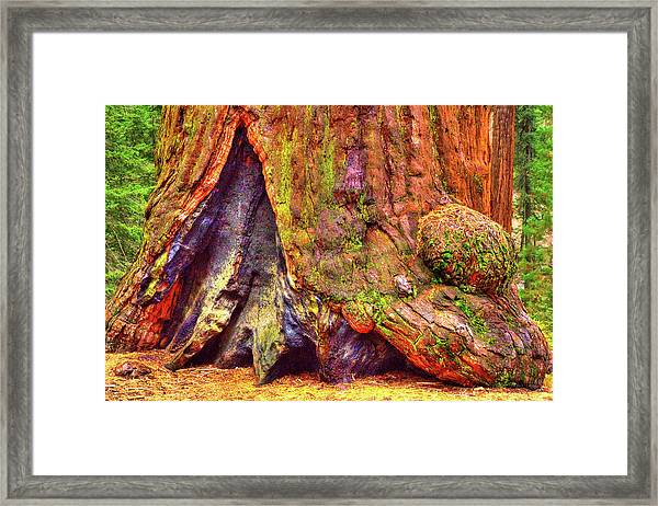 Giant Sequoia Base With Fire Scar Framed Print