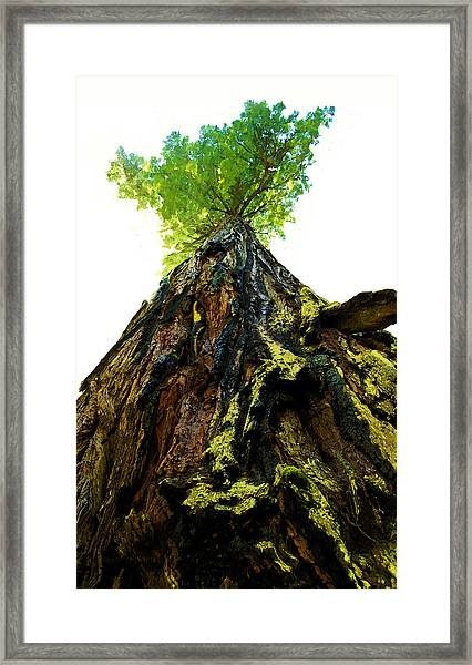 Giants Of The Earth Framed Print