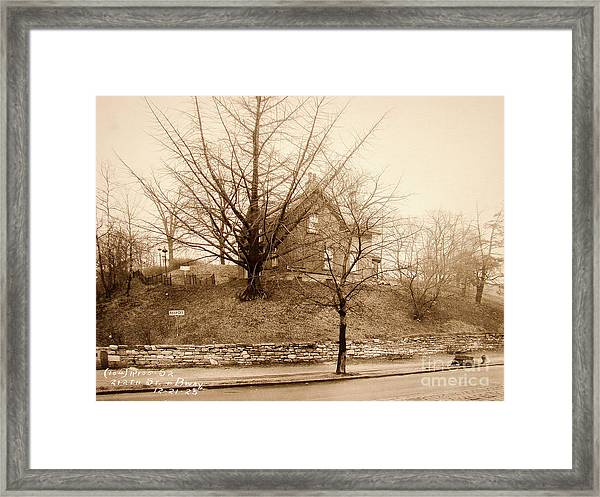 Ginkgo Tree, 1925 Framed Print