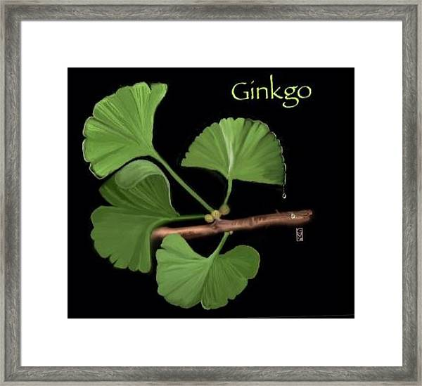 Ginko Framed Print
