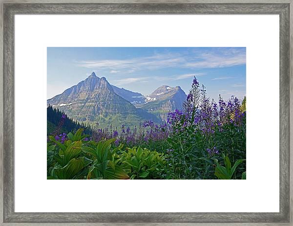 Glacier National Park Fireweed Framed Print