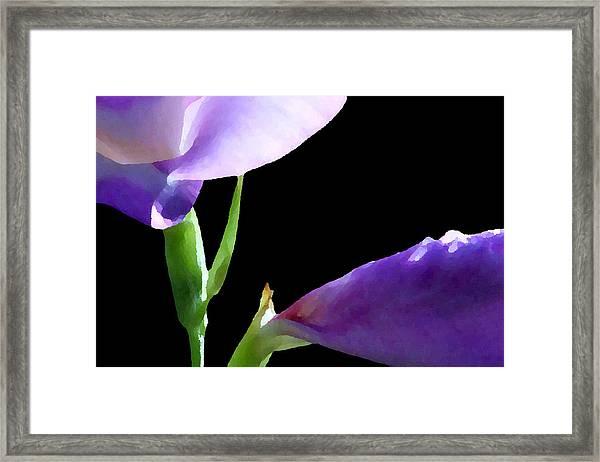 Gladiolas Framed Print
