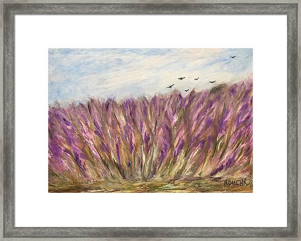 Gladiolus Field Framed Print