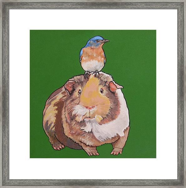 Gladys The Guinea Pig Framed Print
