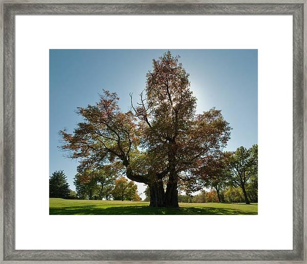 Glen Echo Country Club Logo Tree Framed Print