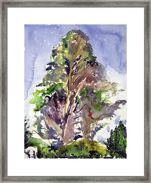 Glendalough Tree Framed Print