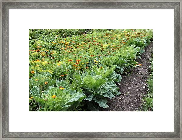 Glenveagh Castle Gardens 4276 Framed Print