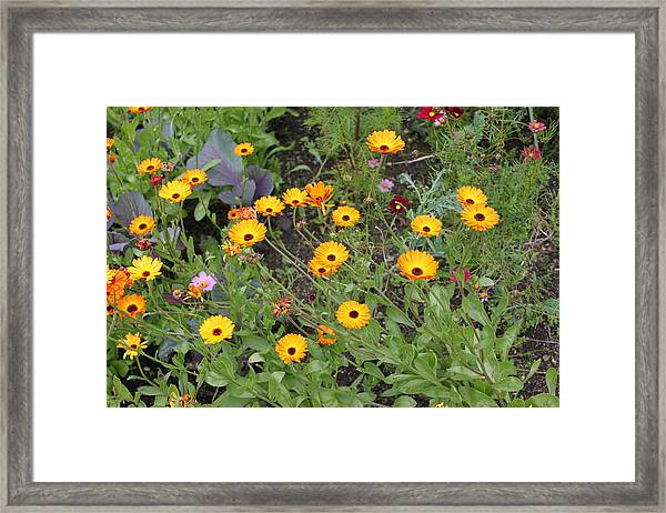 Glenveagh Castle Gardens 4279 Framed Print