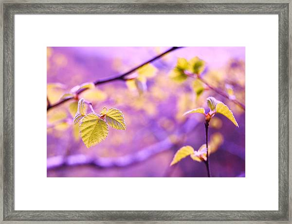 Glisten Framed Print