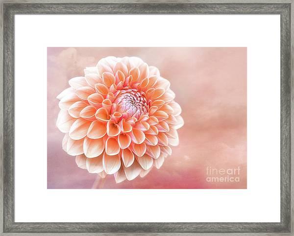 Glorious Salmon Dahlia Framed Print