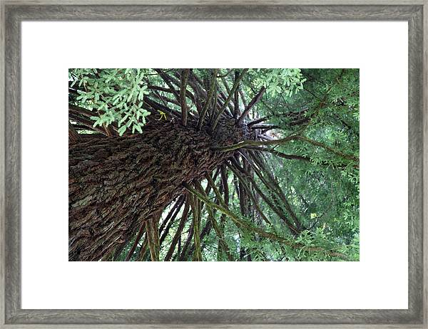 Glorious Tree  Framed Print