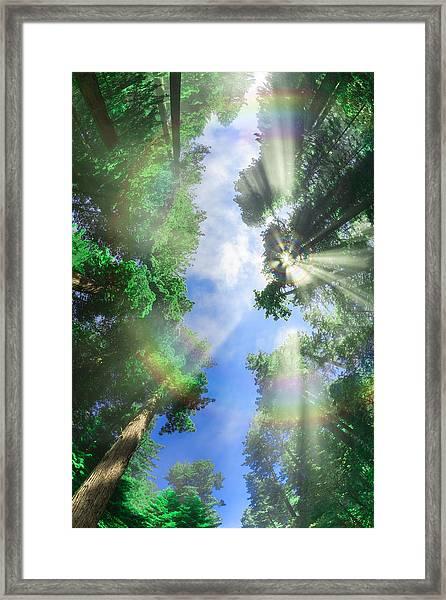 Glory Amongst Redwoods Framed Print