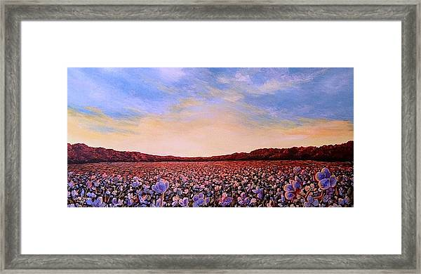 Glory Of Cotton Framed Print