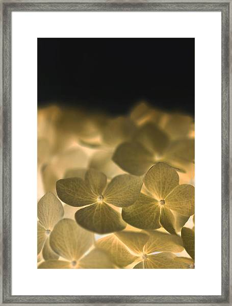 Glow Blossoms Framed Print