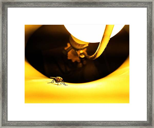 Glow Fly Framed Print