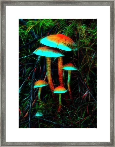 Glowing Mushrooms Framed Print