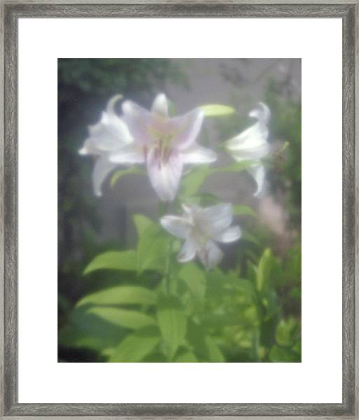 Glowing Spring Framed Print