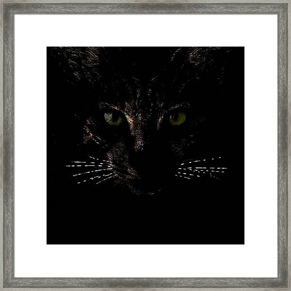 Glowing Whiskers Framed Print