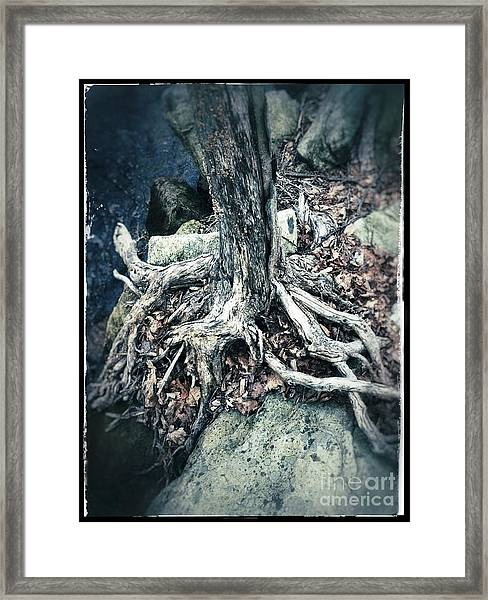 Gnarled Rooted Beauty Framed Print