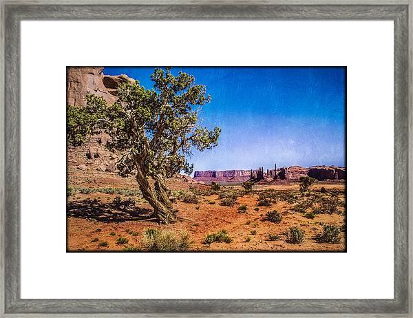 Gnarled Utah Juniper At Monument Vally Framed Print