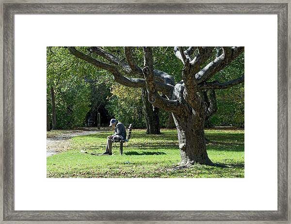 Gnarly Tree Solitude Framed Print