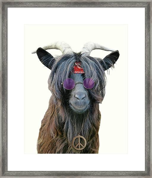Goat Hippie Red Bandana Americana Framed Print