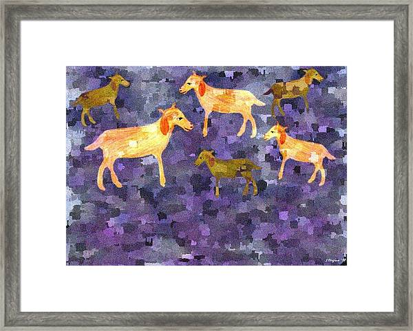 Goats In The Field Framed Print by Sher Magins