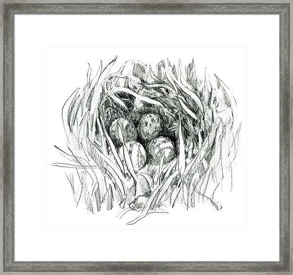 Godwit Nest Framed Print