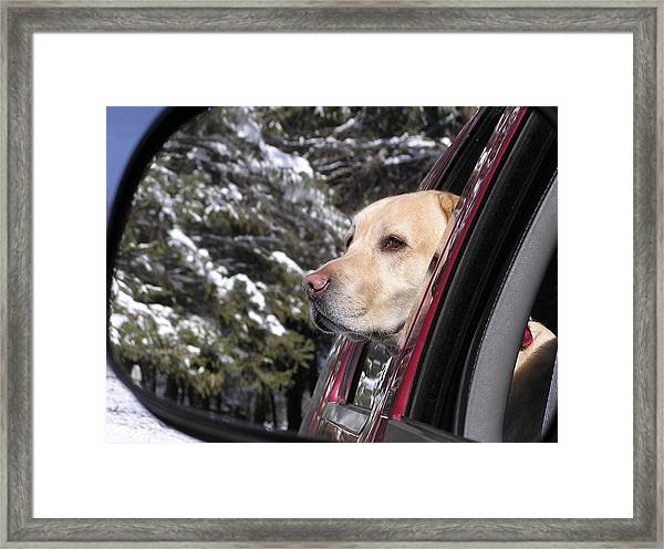 Going For A Ride Framed Print by Richard Mansfield