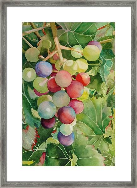 Going For Grapeness Framed Print