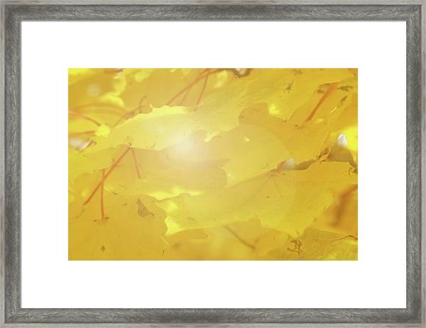 Golden Autumn Leaves Framed Print