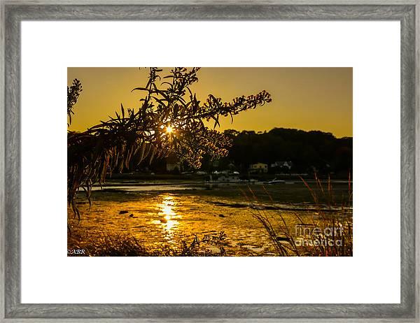Golden Centerport Framed Print