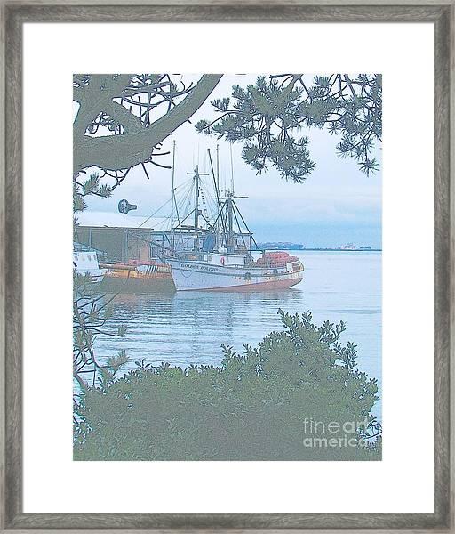 Golden Dolphin Framed Print