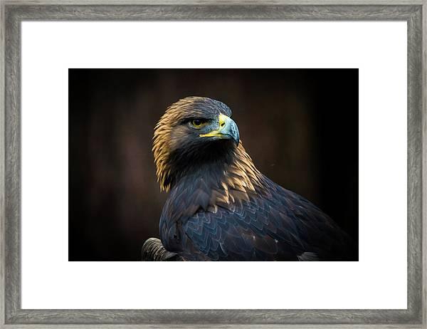 Golden Eagle 3 Framed Print