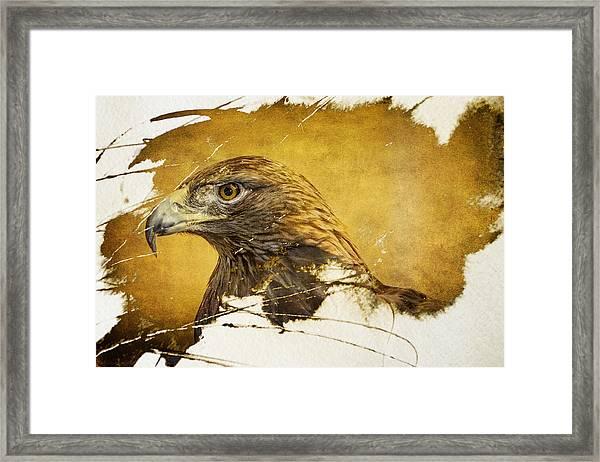 Golden Eagle Grunge Portrait Framed Print