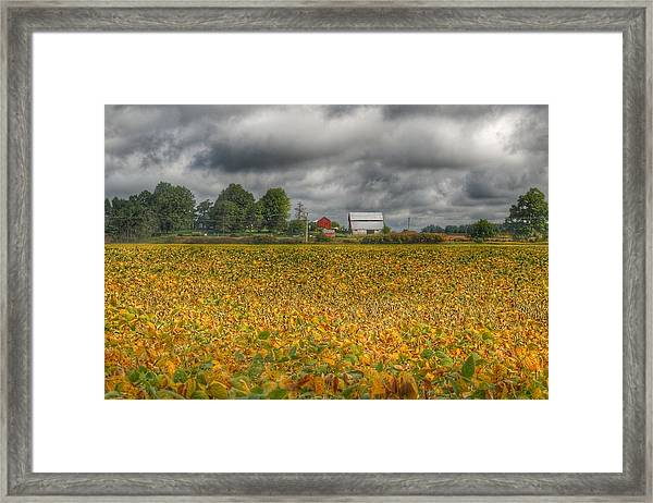 0012 - Golden Fields Farm Framed Print