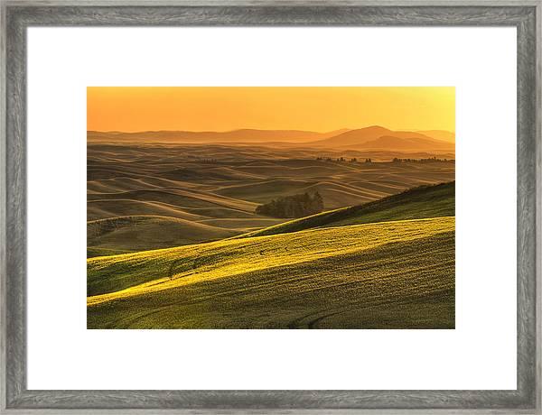 Golden Grains Framed Print